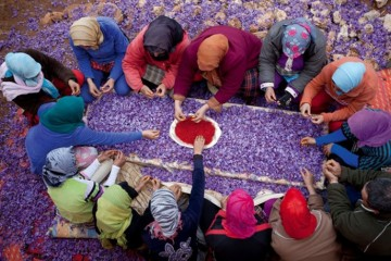 WTFSG_or-rogue-skincare-by-ysl_handpicking-saffron-pistils