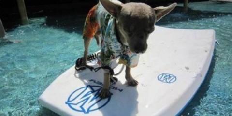 WTFSG_paradise-ranch-dog-resort