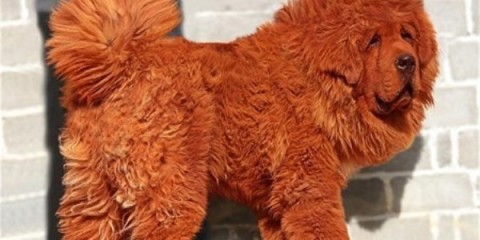 WTFSG_cost-of-worlds-priciest-pooch-1-million