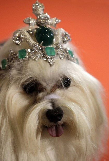 WTFSG_dog-wears-42-million-designer-tiara