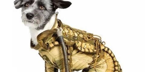WTFSG_genuine-1950s-canine-spacesuit-auction