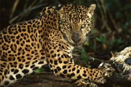 WTFSG_calvin-klein-cologne-jaguars-guatemala